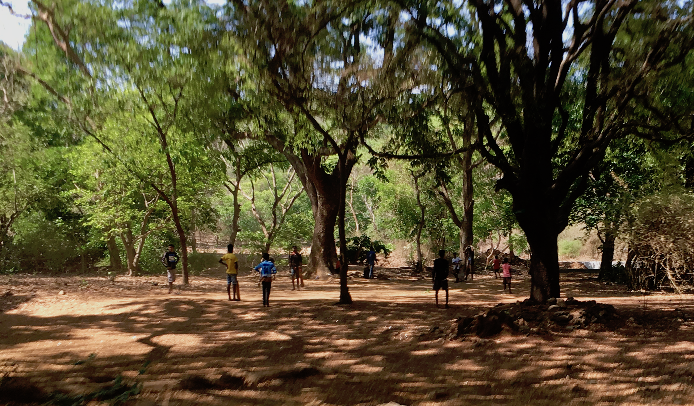 Playing cricket in the Sanjay Gandhi National Park